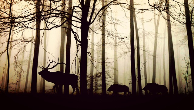 Jelen i dziki